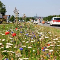 Seminar: Urban bæredygtighed</br>Urban Habitats - let the wild flowers grow. (Nat. Hist, Museum.)